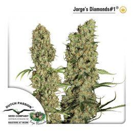 jorge s diamonds dutch passion