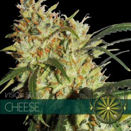 vision seeds cheese 500x500 1