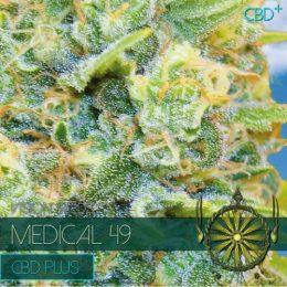 Medical 49 CBD+