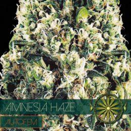 autofem vision seeds amnesia haze 500x500 1