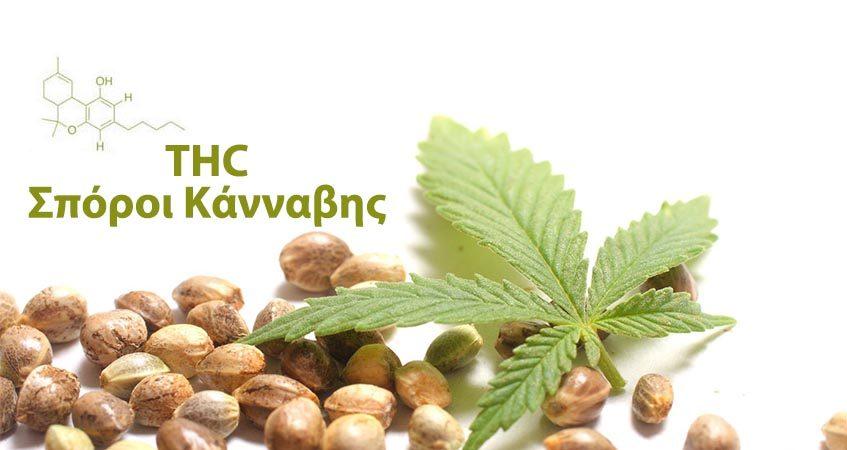 THC sporia kannabis