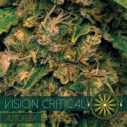 vision seeds auto critical500x500