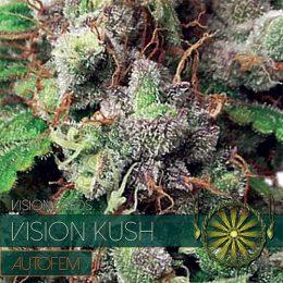 vision seeds auto kush500x500