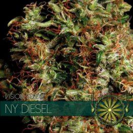vision seeds ny diesel 500x500 1