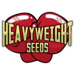 heavyweight seeds 4
