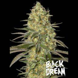 black dream eva