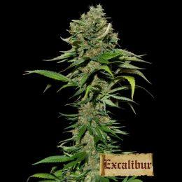 excalibur eva
