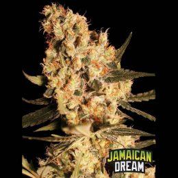 jamaican dream eva