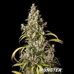 monster eva
