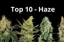 top10 haze