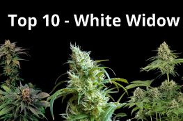 top10 white widow
