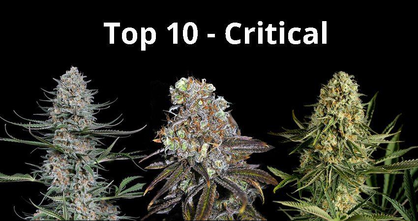top10 critical