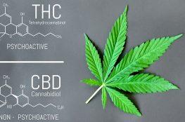 thc cbd